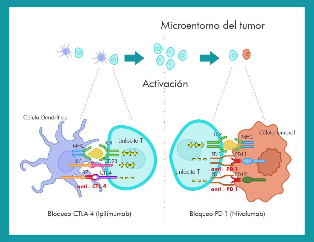 Bloqueo inmunoterapia