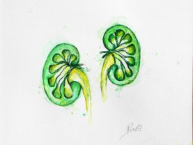Dibujo HC Kidneys