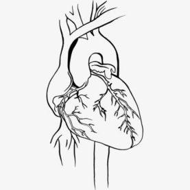 Heart ecocardiografía
